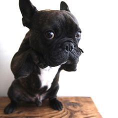 """Batpig & Me Tumble It • My, """"but I really want it"""" look. by..."""