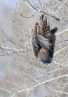 !00% Verticle Decent Photo by Stu McKay -- National Geographic Your Shot
