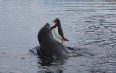 Wonderful Photos of Animals #animals, #animalworld, #pinsville