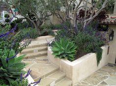 lush mediterranean garden olive tree landscape   Olive Tree decorating ideas for Gorgeous Landscape Mediterranean ...