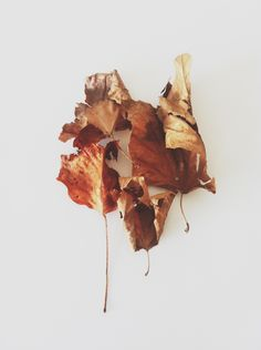 The first leaves of Autumn.By Carley Fay, The Modern Exchange