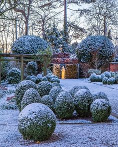Garden in the Winter White Gardens, Outdoor Landscaping, Winter Garden, Topiary, Garden Inspiration, The Great Outdoors, Snow, Canning, Landscape