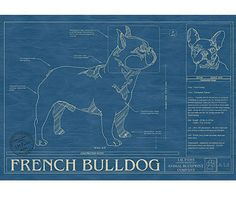 French Bulldog Blueprint. Frame this and it's mine :)