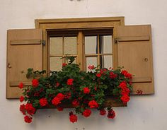 Schruns, Austria, photo by H. Flower Boxes, Flowers, Windows And Doors, Austria, Places Ive Been, Beautiful, Culture, Floral, Royal Icing Flowers
