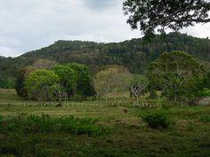Hato en Sabanetica de Upata. Hermoso paisaje rural a 3 kilómetros de Upata vía Sabanetica Sabaneta El Pao