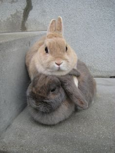 Bunny love :-)