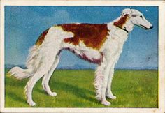 Trading card from the late 1920s.  The back has a description in German.