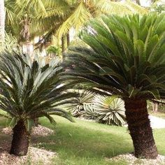 Potted Plants, Garden Plants, Life Form, Interior Plants, Plantation, Tropical Plants, Shrubs, Palms, Weird