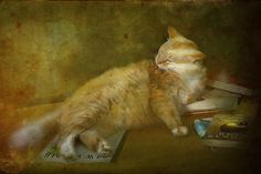 Purrfect for the holidays! http://fineartamerica.com/featured/well-read-kandy-hurley.html?newartwork=true