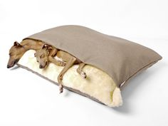 Charley & Theo having a snooze in a Charley Chau Snuggle Bed in Weave Pewter