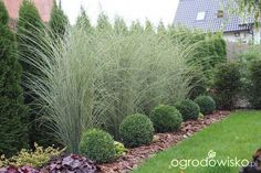 Beautiful ideas for landscaping with ornamental grasses used as an informal grass hedge, mass planted in the garden, or mixed with other shrubs and plants. trees privacy landscaping ideas Landscaping with Ornamental Grasses Privacy Landscaping, Outdoor Landscaping, Front Yard Landscaping, Outdoor Gardens, Landscaping Design, Landscaping Software, Landscaping Contractors, Privacy Plants, Luxury Landscaping