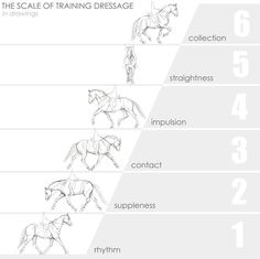 The scale of training dressage horses                                                                                                                                                      More