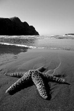 #Black&White #Starfish #Beach #Ocean