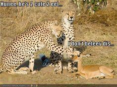 LOL! love this