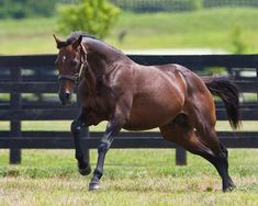 Awesome Again(1994)(Colt) Deputy Minister- Primal Force By Blushing Groom. 5x5 To Nearco & Native Dancer. 12 Starts 9 Wins 2 Thirds. $4,374,590. Won Queen's Plate(Can-1), BC Classic(G1), Whitney H(G1), Stephen Foster H(G2), Jim Dandy S(G2), Saratoga BCH(G2), Hawthorne Gold Cup(G3), 3rd Travers S(G1).