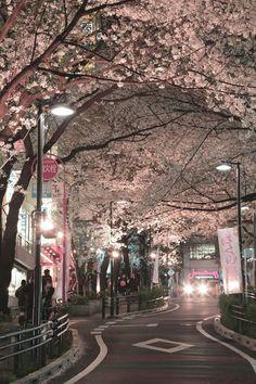 magical blossoms