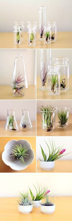 I have fallen in love with the little botanical delights called Air Plants - air plants wedding favors Succulents Garden, Garden Plants, Planting Flowers, Air Plants, Indoor Plants, Potted Plants, Tillandsia Usneoides, Air Plant Terrarium, Deco Floral