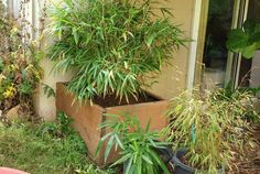 Planter box for bamboo