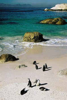 "Boulders Beach, South Africa ""Thanks for visiting, now every back in the water! Beautiful Places To Visit, Oh The Places You'll Go, Beautiful World, Places To Travel, Beautiful Beach, Great Places, Zimbabwe, Boulder Beach, Out Of Africa"
