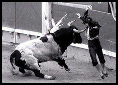 ESPLÁ con un torazo de Los Bayones. Feria de Otoño de #Madrid de 1995 con Pepín Jiménez y El Tato en el cartel. #fotografia #toros
