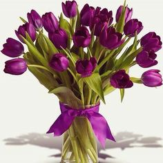 tulips garden care tulips garden care tulips garden care Oh my! Deep rich purple (for the Lords royalty) tulips Garden Care, Happy Brithday, Tulips Garden, One Rose, Name Day, Doodle Art, Art Girl, Lush, Flower Arrangements