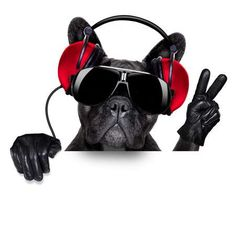 Photo about Cool dj dog listening to music behind a white and blank banner or placard with peace or victory fingers. Funny Animal Pictures, Funny Animals, Cute Animals, Music Love, Listening To Music, Dj Music, Bulldogge Tattoo, Pet Dogs, Dog Cat