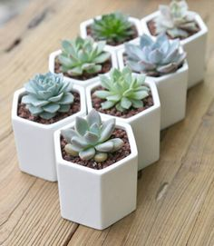I've just found Hexagon Mini Planter With Succulent Or Cacti. Hexagon planter comes with a succulent or cacti. Simple but beautiful.. £17.50