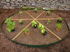 Easy Gardening Projects and Crafts for Beginners