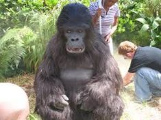 women in gorilla suits - Google Search