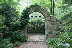 Gate with dutchman's pipe.