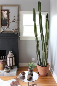 How to Grow Cacti Indoors another in honor of granny a back half wall of cacti sitting on top I will have!