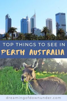 Find out the best attractions in Perth Australia with this list of Perth beaches such as Cottesloe, city nightlife, trips like Fremantle and beautiful parks! #australia perth #beaches #traveldestinations Australia Country, Perth Western Australia, Australia Travel, Langley Park, Stuff To Do, Things To Do, Australian Photography, Travel Advise, Kings Park
