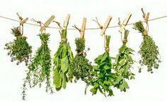 Windowsill Herb Garden - Six Gourmet Herbs Spices And Herbs, Fresh Herbs, Herbal Remedies For Menopause, Hanging Herbs, Herbs Indoors, Plantar, Growing Herbs, Growing Mint, Medicinal Plants