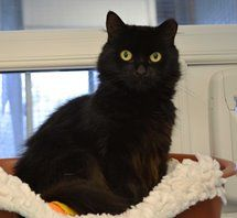 Warrington Animal Welfare - Opal