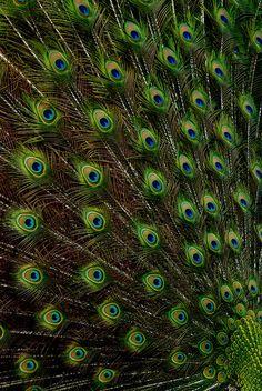 peacock #sponsored #greenworksgames
