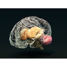 This brain represents how smart Atticus was. He had so much wisdom to teach his kids.