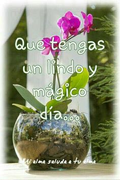 Salud Tutorial and Ideas Map Wallpaper, Iphone Wallpaper, Mom Prayers, Orchid Show, Growing Orchids, Travel Words, Happy Wishes, Good Morning Quotes, Gods Love