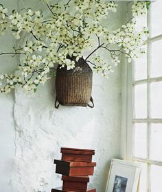 Dogwood branches tucked into an antique Japanese wicker backpack. Wish I had one of those.