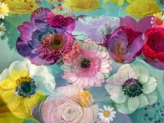 Ocean Of Blossoms I Photography at ArtistRising.com © ALAYA GADEH