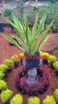 Sale& decorate! Gardenia
