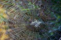 Les araignées...Même les plus minuscules et MÊME en photo...(d'où l'absence de la bête sur la toile là ^^)