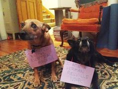 22 bad dogs with signs detailing their crimes ~ Animal Space