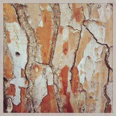 Tree bark photo by Hava Kaplan