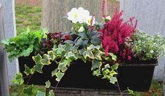 Bepflanzter Blumenkasten Winter