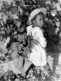 size: Photographic Print: Daughter of Sharecropper, Lonnie Fair, in Field Picking Cotton by Alfred Eisenstaedt : Picking Cotton, Photo Story, History Facts, History Photos, Sale Poster, African American History, Vintage Photos, Antique Photos, Vintage Photographs