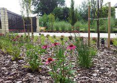 Moja codzienność - ogród Oli - strona 1501 - Forum ogrodnicze - Ogrodowisko