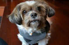261 Best Dog S Life Images Dogs Pets Dog Life