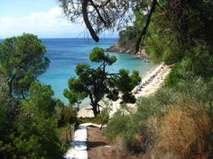 One of Skiathos wonderful beaches. It is under old Xenias Hotel, after Koukounaries beach - Skiathos island - Skiathos, Magnisia, Greece