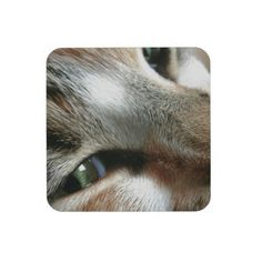 Feline Face Drink Coaster!  From the Conquest Kitty Store!  http://www.zazzle.com/conquestkitty*