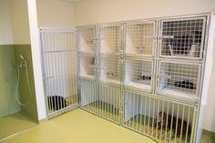 Hospitalisatieruimte voor dierenarts Polaster met douche.